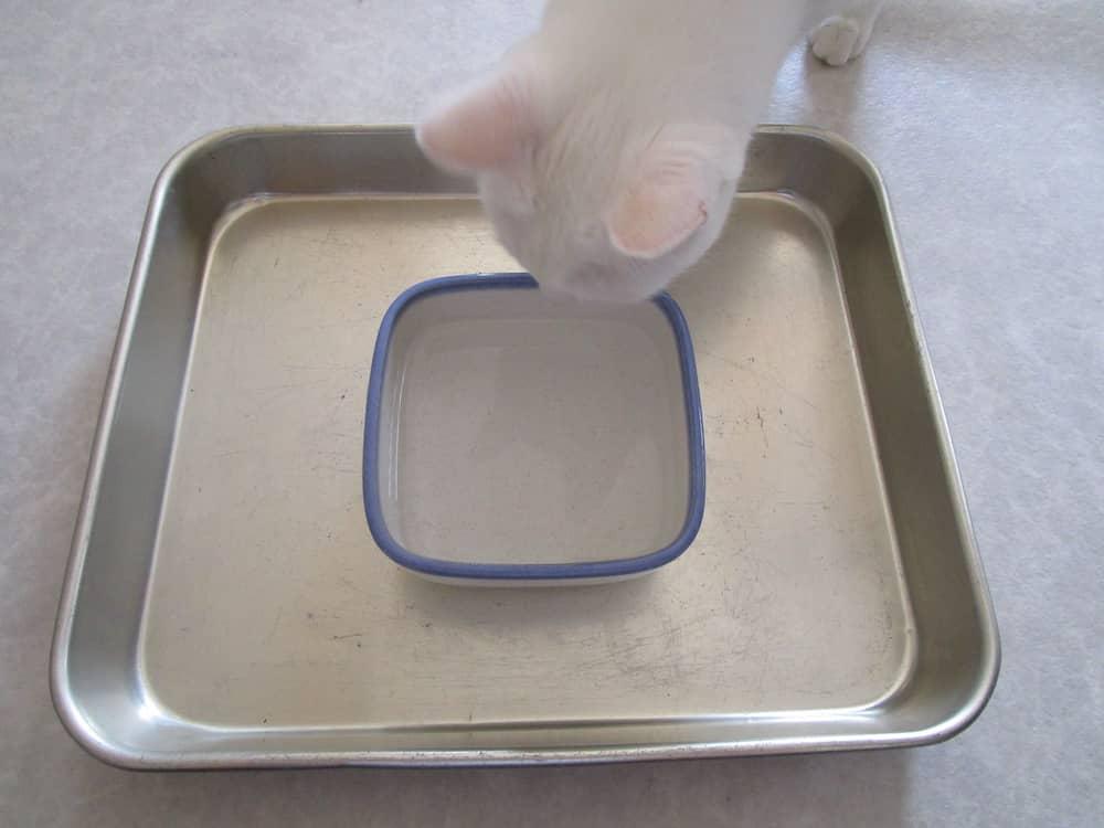 猫の水入れ